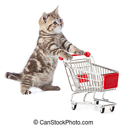 Funny cat standing with shopping cart