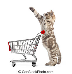 Funny cat standing with shopping cart side view isolated