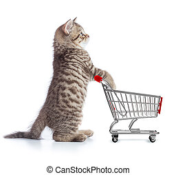 Funny cat standing with shopping cart side view