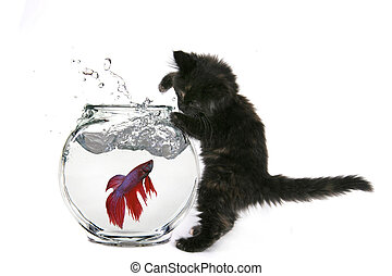 Funny Cat Trying to Catch a Fish - Black Cat Trying to Catch...