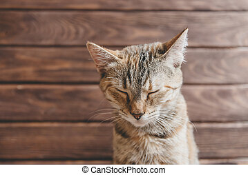 Funny cat with closed eyes.