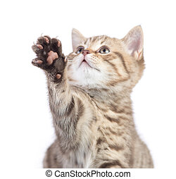 Funny cat with focus on paw isolated