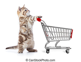Funny cat with shopping cart side view