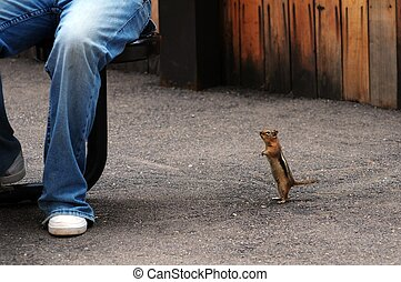 Funny Chipmunk - Funny Small Chipmunk Asking For Food....