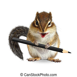 Funny chipmunk hold pencil, on white