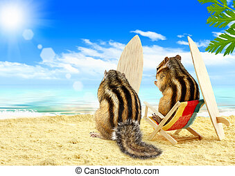 chipmunks serfers on the beach with surf boards - Funny...