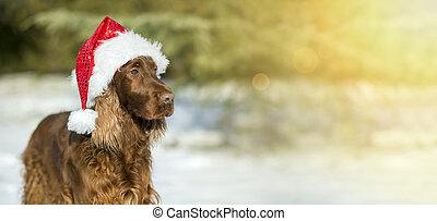 Funny Christmas dog banner