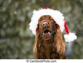 funny christmas dog - Funny Dog Christmas Cards