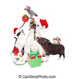 Funny Christmas Pet Compositie