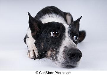 Funny closeup portrait of dog