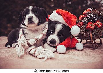 funny corgi puppy dogs in santa hat