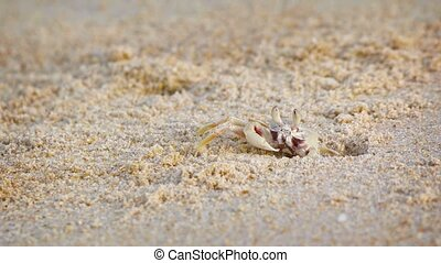 Funny crab digs a hole in the sand on a tropical beach. ...