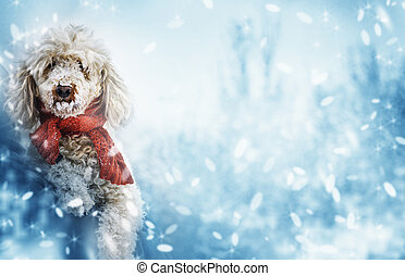 funny cute dog with red scarf and snow on his nose