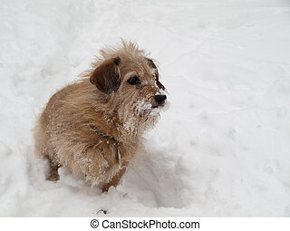 funny dachshund dog