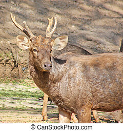 Funny deer taken in Zoo