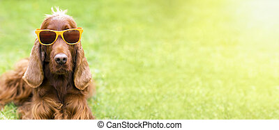 Funny dog with sunglasses - web banner idea