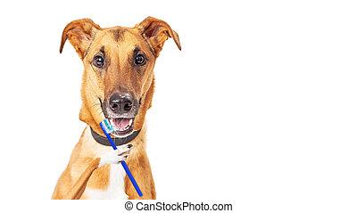 Funny Dog Brushing Teeth