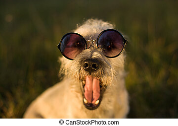 Funny dog, close-up.