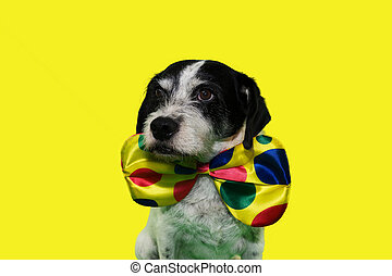 FUNNY DOG CLOWN. MIXED-BREED PUPPY WEARING A COLORFUL BOWTIE FOR CARNIVAL, BIRTHDAY OR NEW YEAR PARTY. ISOLATED ON YELLOW BACKGROUND.