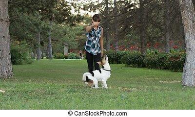 Funny Dog Densing
