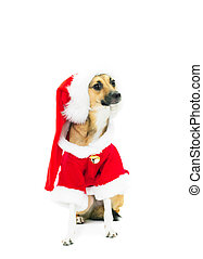 funny dog dressed as Santa Claus