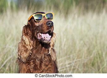 Funny fashionist dog wearing orange sunglasses