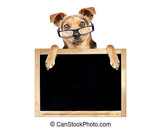 Funny dog glasses blank blackboard isolated