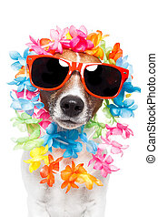 funny dog  hawaiian  lei and sunglasses