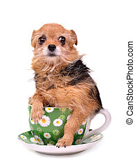 Funny dog hiding in a cup