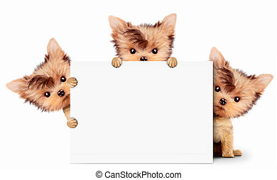 Funny dog holding empty banner, isolated on white - Funny...