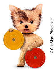 Funny dog holding with barbell bar or plate. Concept of...