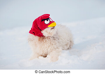 funny dog in angry bird mask, portrait