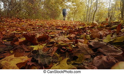 Funny dog jack russell terrier and his owner walk in the autumn forest
