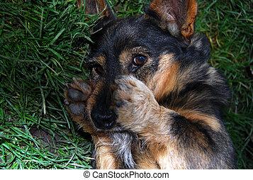 Funny dog looking at camera.