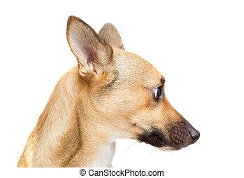 funny dog muzzle on white background isolated