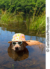 Funny dog on vacation