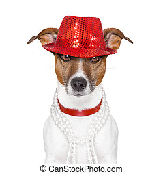 funny dog - funny and crazy looking dog with fancy red hat...