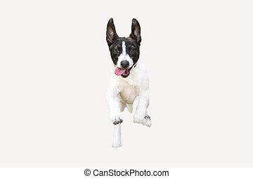 Funny Dog Running Isolated on White