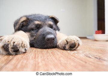 funny dog sleeping on the floor