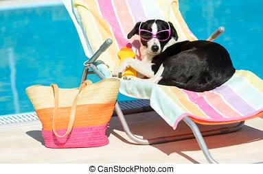 Funny dog sunbathing on summer