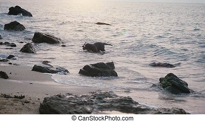 Funny dog swims in the sea plays on the waves between stones. slow motion. 1920x1080