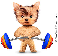 Funny dog training with barbell in sport gym. Concept of...