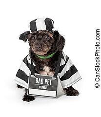 Funny Dog Wearing Prisoner Costume