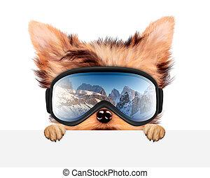 Funny Dog wearing ski goggles. Christmas concept