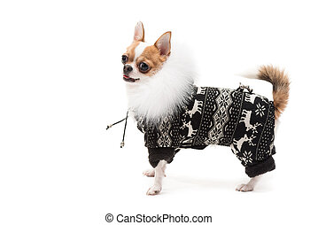 Funny dog wearing wearing winter outfit