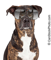 Funny Dog With Cat Reflection in Sunglasses