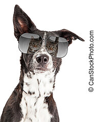 Funny Dog With Reflection of Cat in Sunglasses