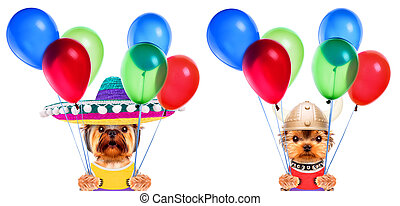 Funny dogs holding balloons. Party concept