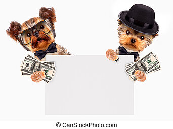 Funny dogs holding bundles of money and banner