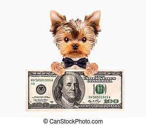Funny dogs holding bundles of money